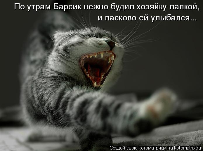 Котоматрица: По утрам Барсик нежно будил хозяйку лапкой, и ласково ей улыбался...