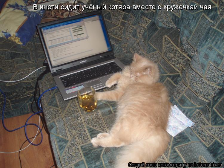 Котоматрица: В инети сидит учёный котяра вместе с кружечкай чая