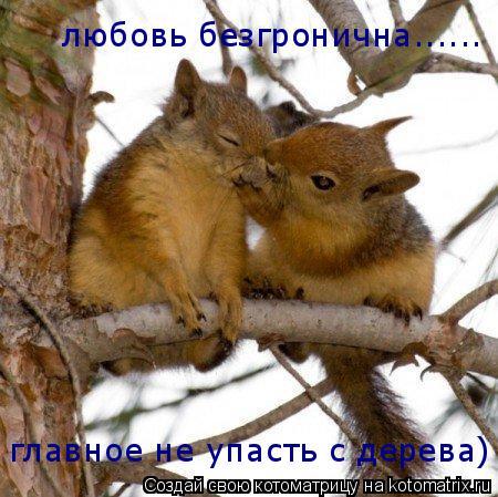 Котоматрица: любовь безгронична...... главное не упасть с дерева)