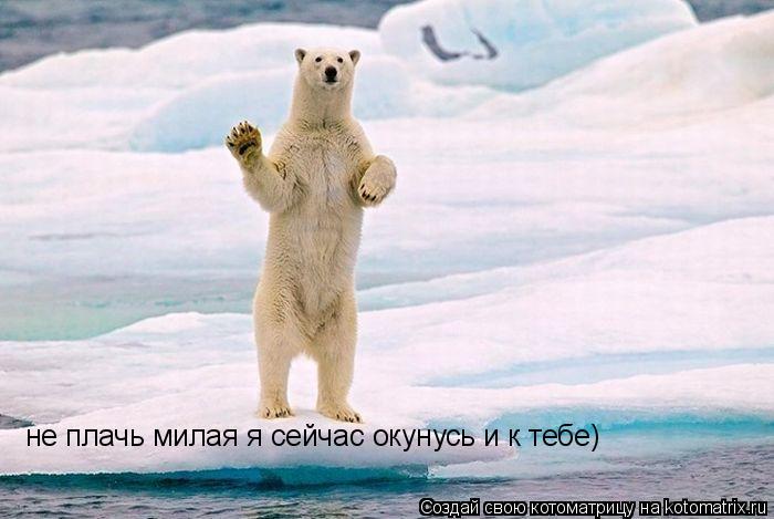 Котоматрица: не плачь милая я сейчас окунусь и к тебе)