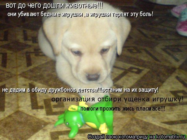 Котоматрица: вот до чего дошли животные!!! они убивают бедные игрушки ,а игрушки терпят эту боль! не дадим в обиду дружбонов детства!!!встаним на их защиту!
