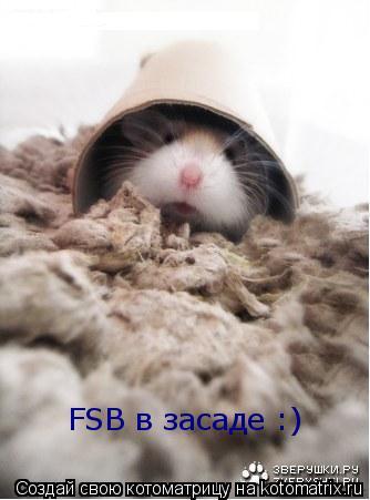 Котоматрица: FSB в засаде :)