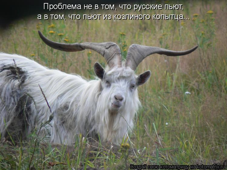 Котоматрица: Проблема не в том, что русские пьют,  а в том, что пьют из козлиного копытца...