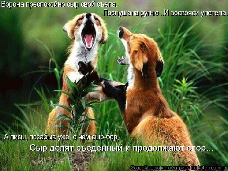 Котоматрица: Ворона преспокойно сыр свой съела. Послушала ругню...И восвояси улетела. А лисы, позабыв уже, о чём сыр-бор, Сыр делят съеденный и продолжают