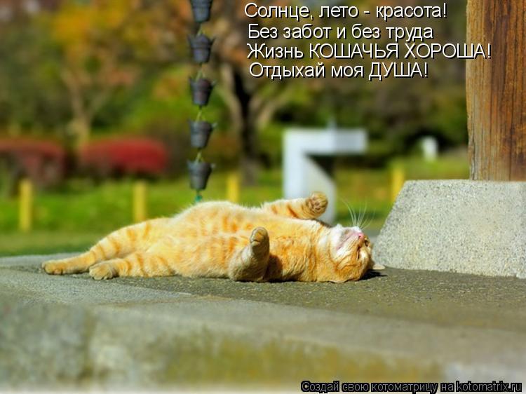 Котоматрица: Солнце, лето - красота! Без забот и без труда Жизнь КОШАЧЬЯ ХОРОША! Отдыхай моя ДУША!