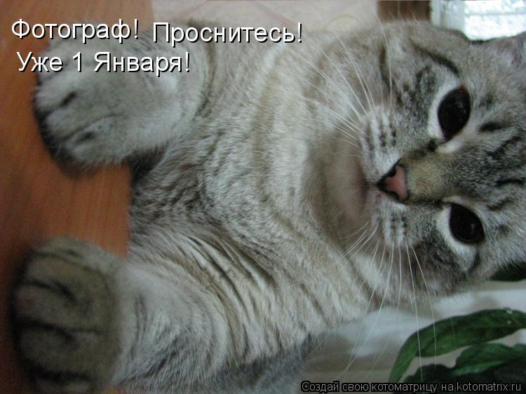 Котоматрица: Фотограф! Проснитесь! Уже 1 Января!