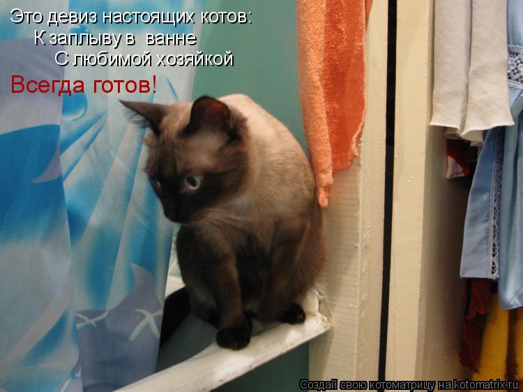 Котоматрица: Это девиз настоящих котов: К заплыву в  ванне С любимой хозяйкой Всегда готов!