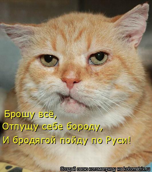 Котоматрица: Брошу всё, Отпущу себе бороду, И бродягой пойду по Руси!