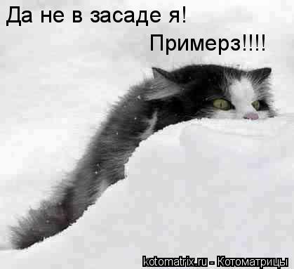 Котоматрица: Да не в засаде я! Примерз!!!!