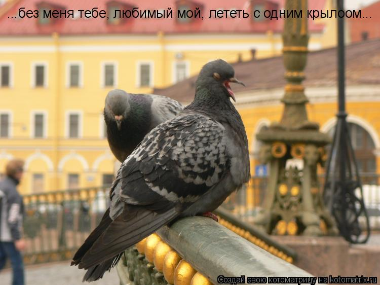 Котоматрица: ...без меня тебе, любимый мой, лететь с одним крылоом...