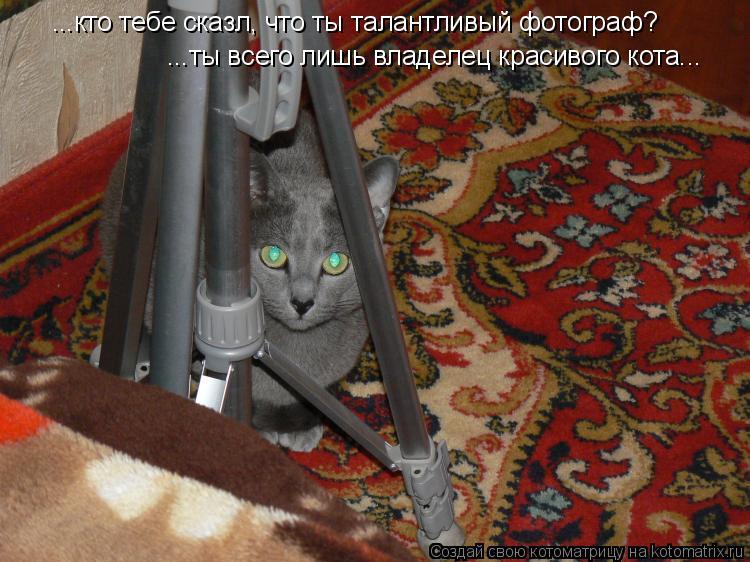 Котоматрица: ...кто тебе сказл, что ты талантливый фотограф?  ...ты всего лишь владелец красивого кота...