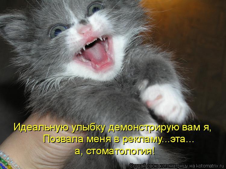 Котоматрица - Идеальную улыбку демонстрирую вам я, Позвала меня в рекламу...эта... а