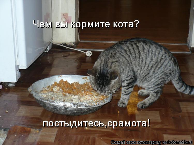 Котоматрица: Чем вы кормите кота? постыдитесь,срамота!