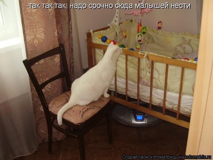 Котоматрица: -так так так, надо срочно сюда малышей нести