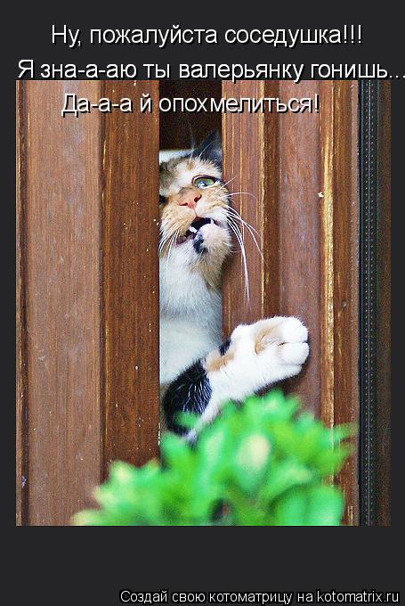 Котоматрица: Ну, пожалуйста соседушка!!!  Я зна-а-аю ты валерьянку гонишь... Я зна-а-аю ты валерьянку гонишь... Да-а-а й опохмелиться!