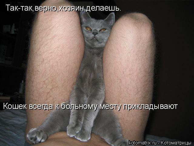 Котоматрица: Так-так,верно,хозяин,делаешь. Кошек всегда к больному месту прикладывают