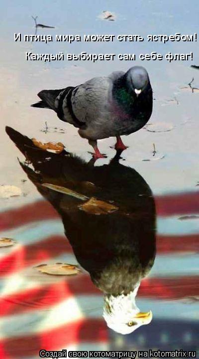 Котоматрица: И птица мира может стать ястребом! Каждый выбирает сам себе флаг!