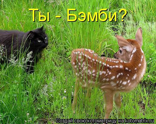 Котоматрица: Ты - Бэмби?