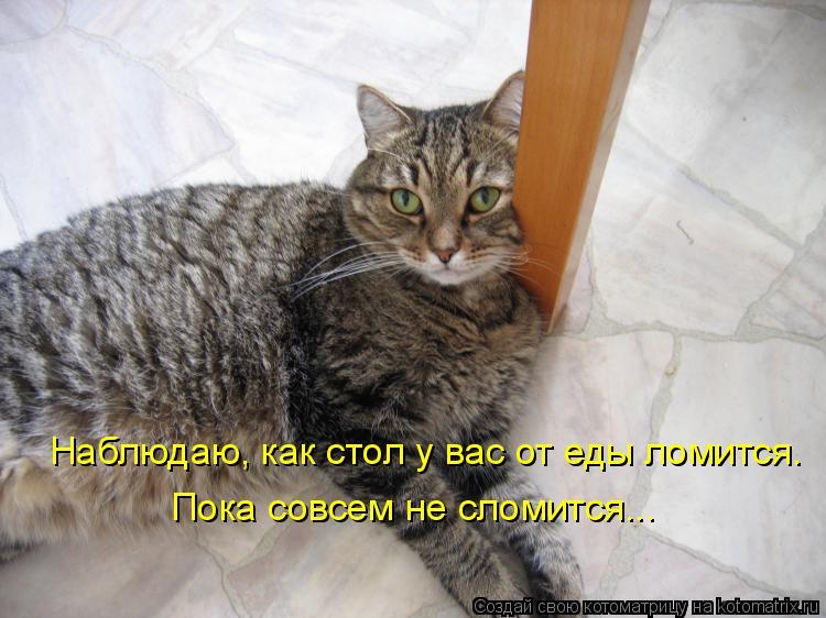 Котоматрица: Наблюдаю, как стол у вас от еды ломится. Пока совсем не сломится...