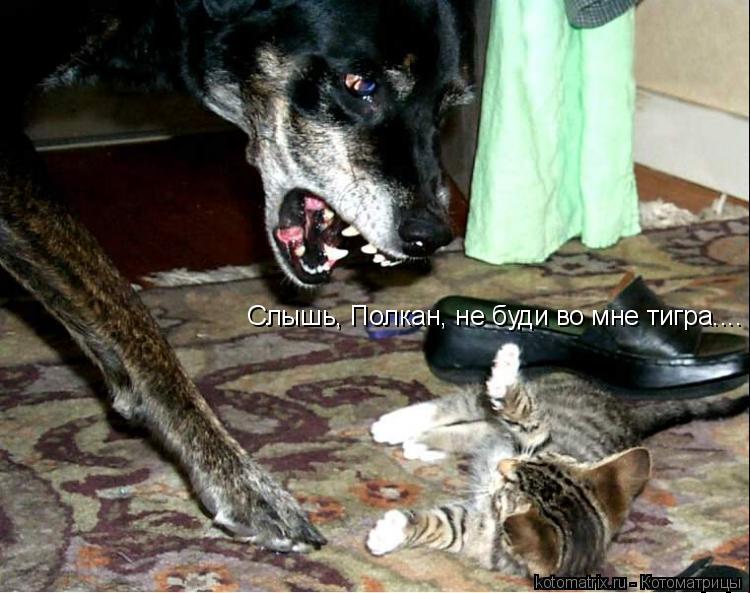 Котоматрица: Слышь, Полкан, не буди во мне тигра....