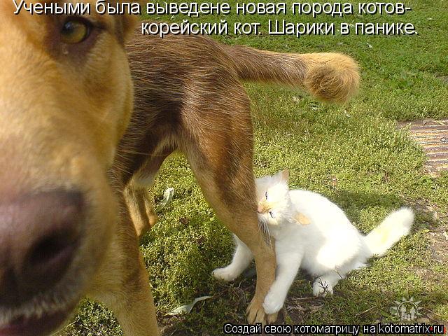 Котоматрица: Учеными была выведене новая порода котов- корейский кот. Шарики в панике.