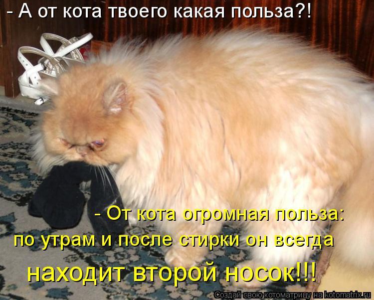 Котоматрица: - А от кота твоего какая польза?! - От кота огромная польза: по утрам и после стирки он всегда  находит второй носок!!!