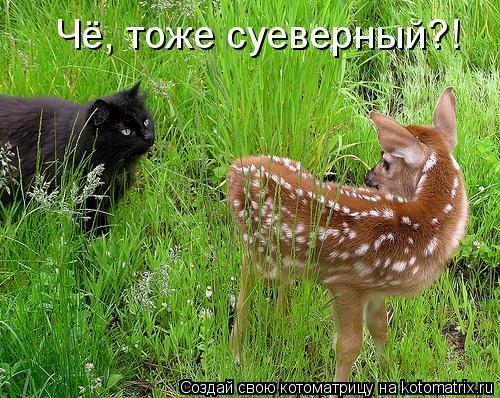 Котоматрица: Чё, тоже суеверный?!