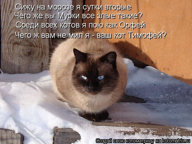 Котоматрица: Сижу на морозе я сутки вторые Среди всех котов я пою как Орфей Чего ж вам не мил я - ваш кот Тимофей? Чего же вы Мурки все злые такие?