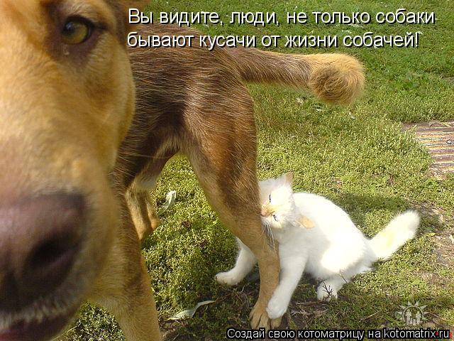 Котоматрица: Вы видите, люди, не только собаки бывают кусачи от жизни собачей!