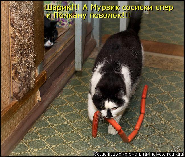 Котоматрица: Шарик!!! А Мурзик сосиски спер и Полкану поволок!!!