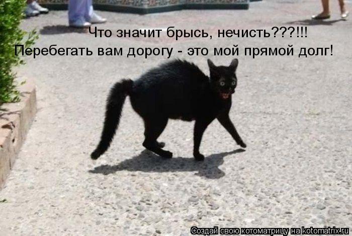 Котоматрица: Что значит брысь, нечисть???!!! Перебегать вам дорогу - это мой прямой долг!