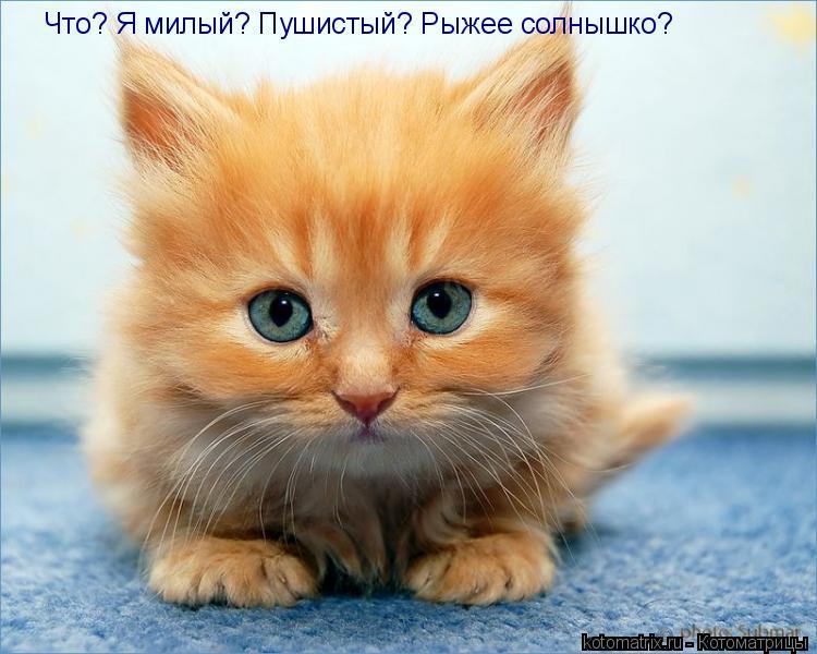 Котоматрица: Что? Я милый? Пушистый? Рыжее солнышко?