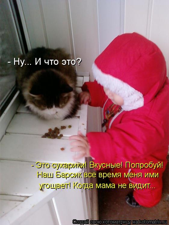 Котоматрица: - Ну... И что это? - Это сухарики! Вкусные! Попробуй! Наш Барсик все время меня ими угощает! Когда мама не видит...