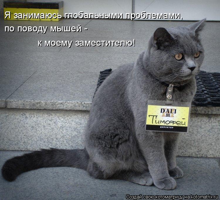 Котоматрица: Я занимаюсь глобальными проблемами, по поводу мышей -  к моему заместителю!