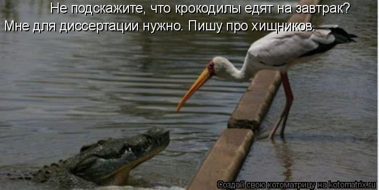 Котоматрица: Не подскажите, что крокодилы едят на завтрак? Мне для диссертации нужно. Пишу про хищников.