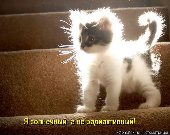 Котоматрица: Я солнечный, а не радиактивный!...
