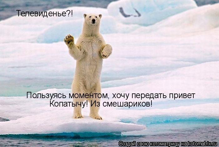 Котоматрица: Телевиденье?! Пользуясь моментом, хочу передать привет  Пользуясь моментом, хочу передать привет  Копатычу! Из смешариков!