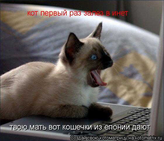 Котоматрица: твою мать вот кошечки из епонии дают кот первый раз залез в инет