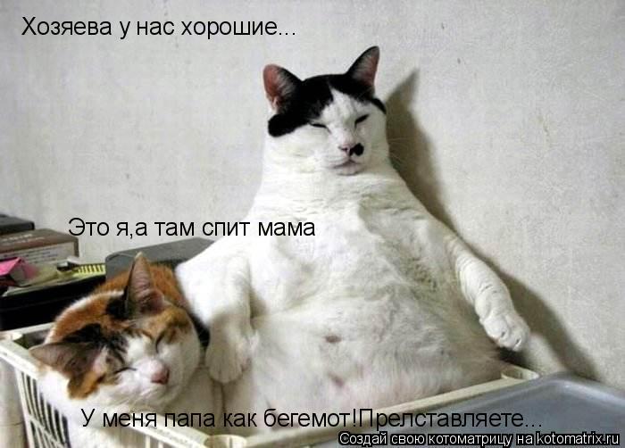 Котоматрица: Хозяева у нас хорошие... Это я,а там спит мама У меня папа как бегемот!Прелставляете...