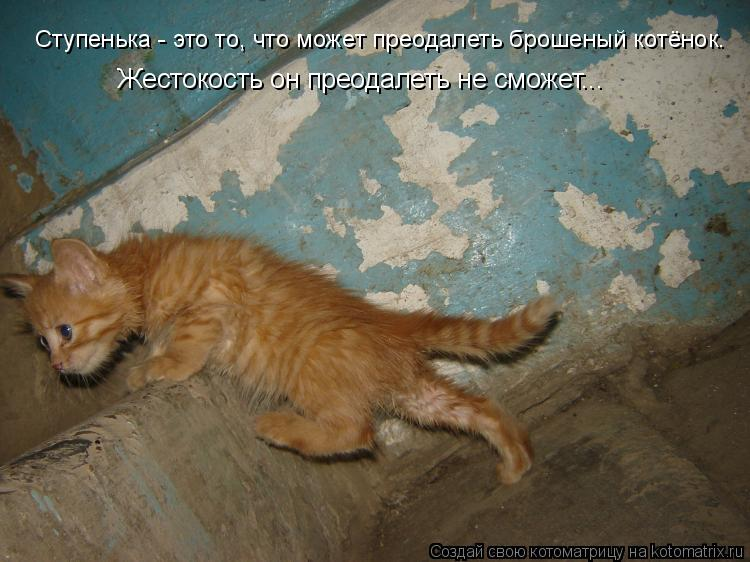 Котоматрица: Жестокость он преодалеть не сможет... Ступенька - это то, что может преодалеть брошеный котёнок.