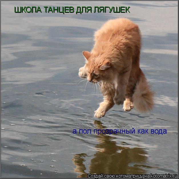 Котоматрица: ШКОЛА ТАНЦЕВ ДЛЯ ЛЯГУШЕК а пол прозрачный как вода