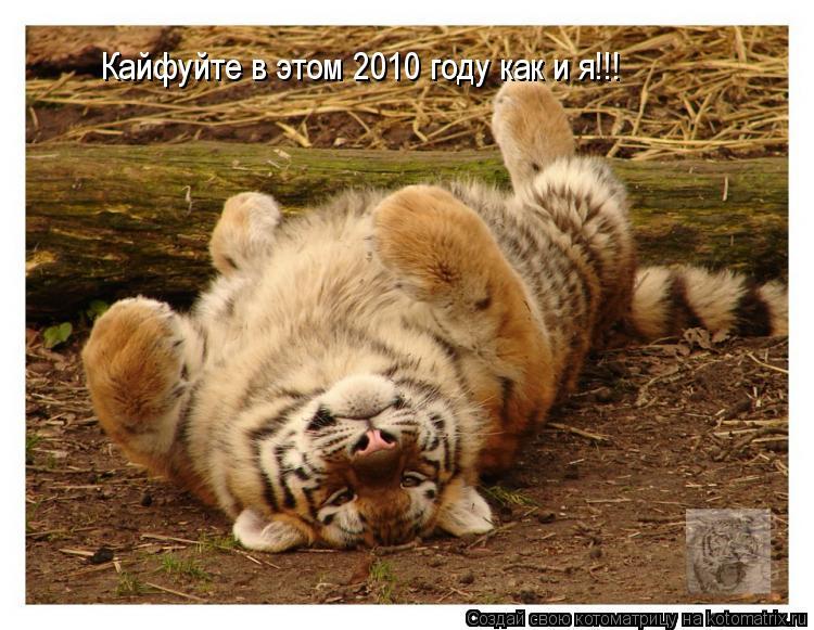 Котоматрица: Кайфуйте в этом 2010 году как и я!!!