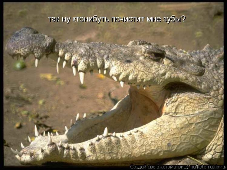 Котоматрица: так ну ктонибуть почистит мне зубы?