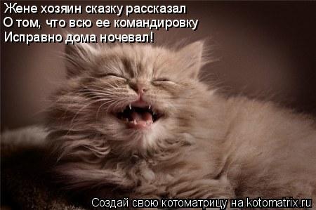 Котоматрица: Жене хозяин сказку рассказал О том, что всю ее командировку  Исправно дома ночевал!