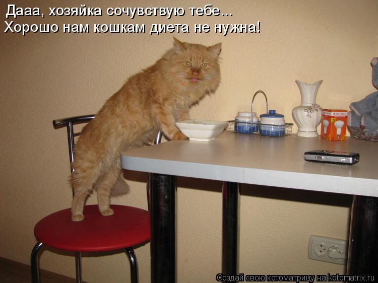 Котоматрица: Дааа, хозяйка сочувствую тебе... Хорошо нам кошкам диета не нужна!