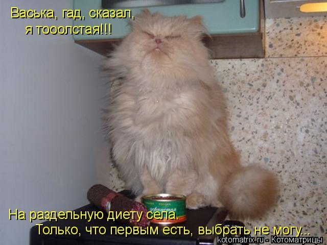 Котоматрица: Васька, гад, сказал, я тооолстая!!! На раздельную диету села. Только, что первым есть, выбрать не могу...