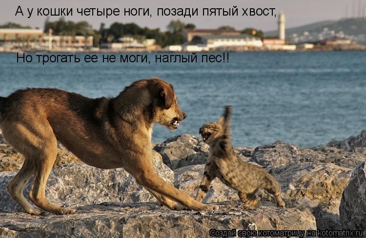 Котоматрица: А у кошки четыре ноги, позади пятый хвост, Но трогать ее не моги, наглый пес!!