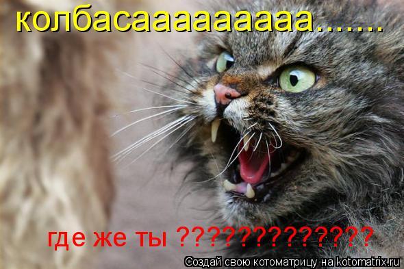 Котоматрица: колбасааааааааа....... где же ты ?????????????