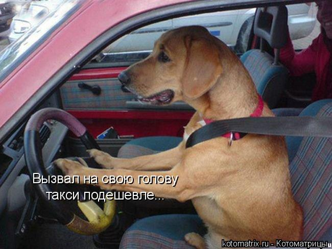 Котоматрица: Вызвал на свою голову  такси подешевле...