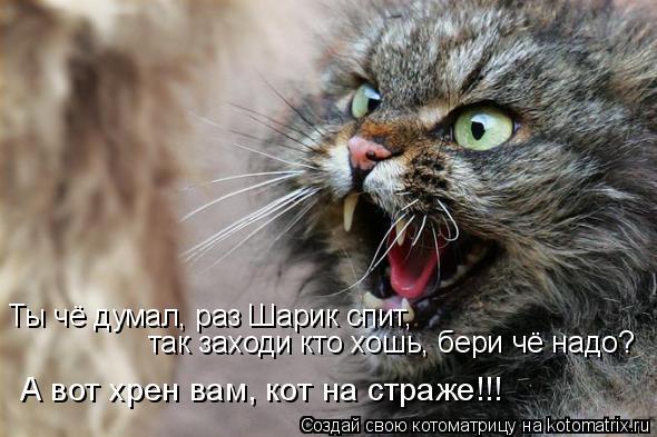 Котоматрица: Ты чё думал, раз Шарик спит,  так заходи кто хошь, бери чё надо? А вот хрен вам, кот на страже!!!